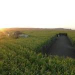 "Biocarburanti, i produttori USA a Obama: ""Salvaci"""