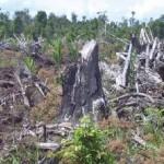 Il biodiesel europeo provoca la deforestazione in Indonesia