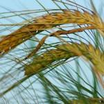 Incentivi ai biocarburanti, l'Europa ci sta ripensando