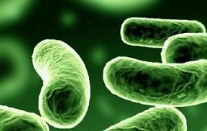Un batterio apre nuove strade per l'idrogeno