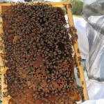 Qualità dell'aria: negli aeroporti tedeschi si controlla con le api