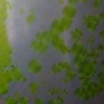 Il biocarburante del futuro proviene dalle alghe