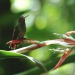 Biodiversità: la Costa Rica sta per bandire la caccia sportiva
