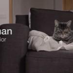 L'eco guerriero più carino? E' Norman il gatto!