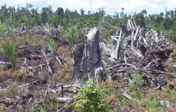 Un'immagine della deforestazione
